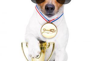 how to maximise on winnning an award
